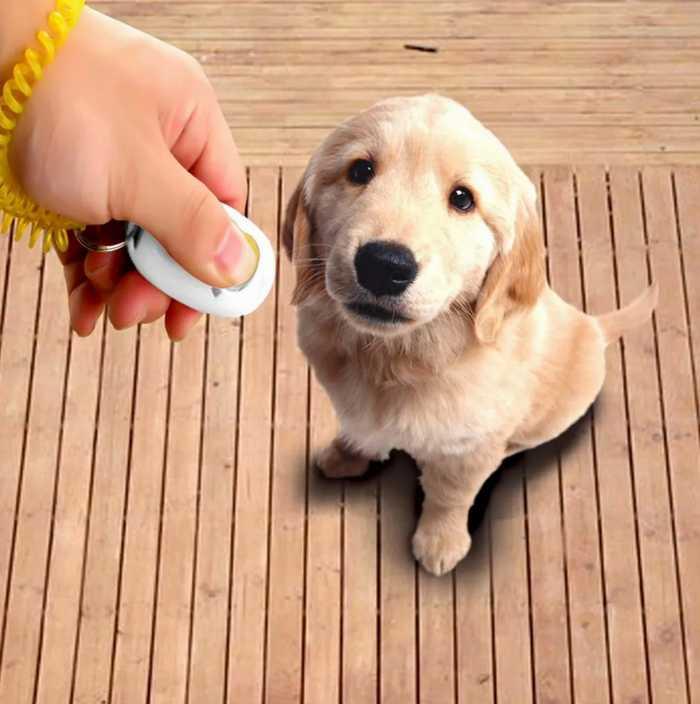 используйте кликер, чтобы собака откликалас на свое имя