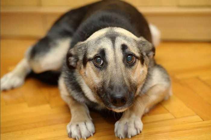 испуганная собака