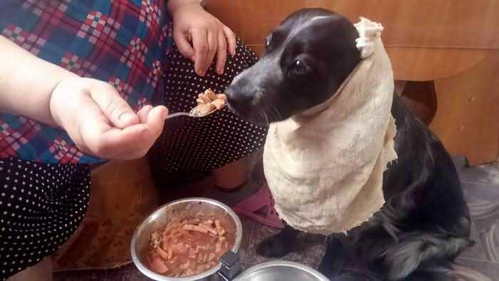 как кормить собаку дома зимой