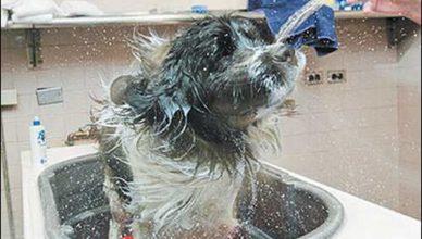 как я купала собачку Зосю