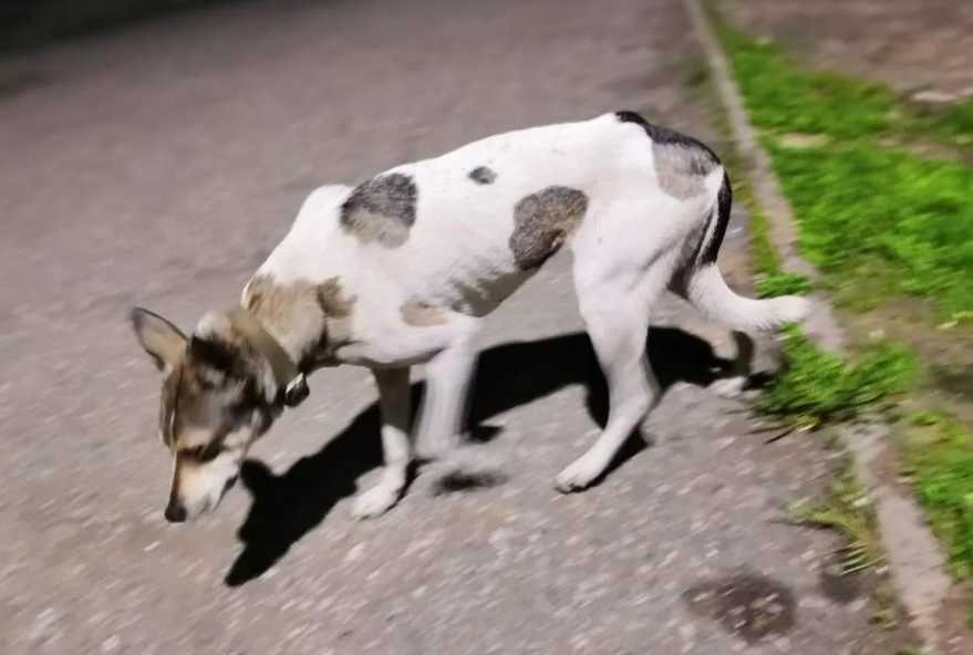 как найти собаку