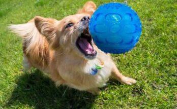 как научить собаку играть в мяч