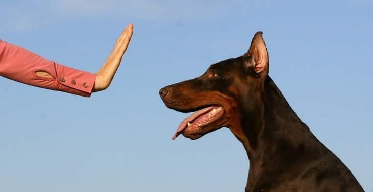Как научить собаку команде Фу