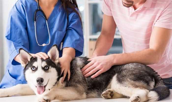 первая помощь -как осматривать собаку