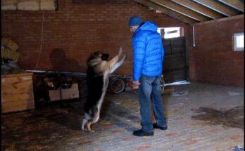 Антуан Наджарян - как помочь собаке
