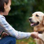 Незнакомая собака - как подойти, приветствовать и подружиться
