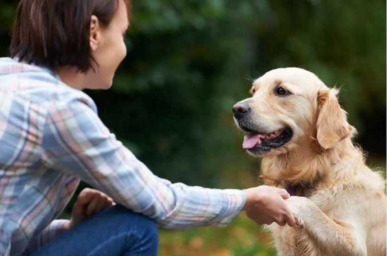 как познакомиться с собакой