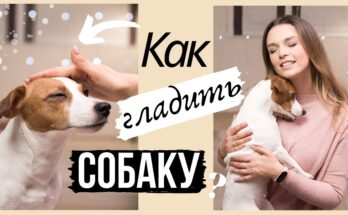Как правильно гладить собаку