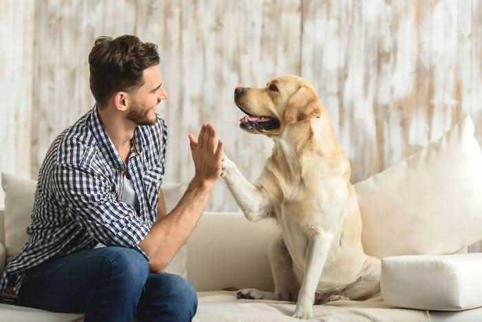 как снять квартиру если у тебя большая собака