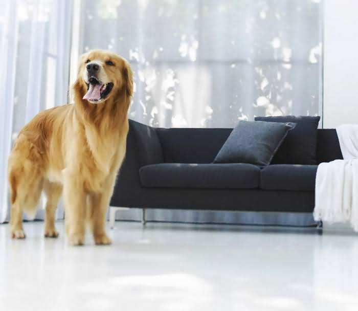 как снять квартиру, если у нас собака
