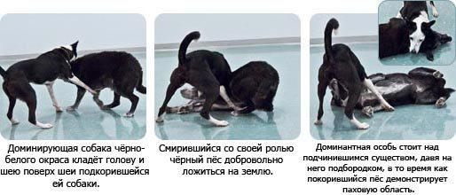 разные типы поведения собак