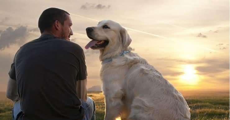 стать вожаком для собаки