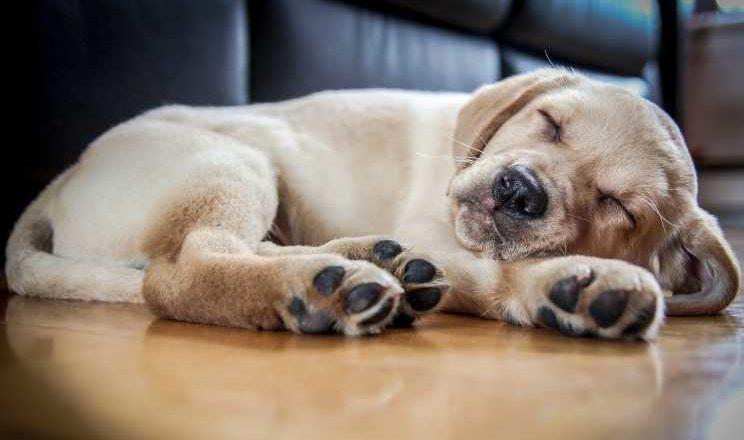 видят ли собаки сны