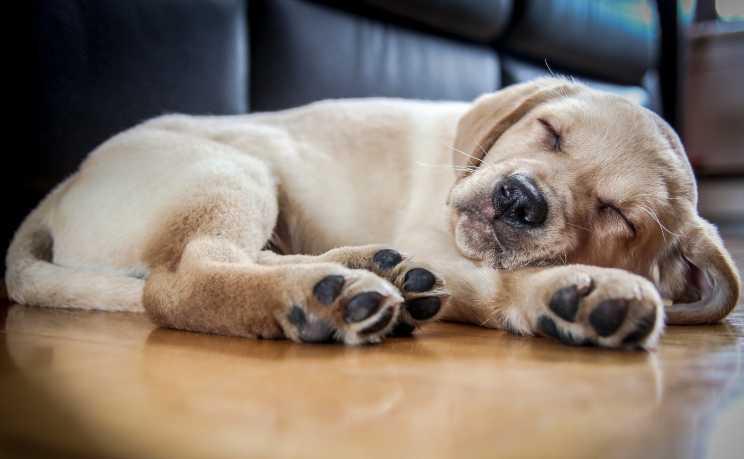 Собаки видят сны?