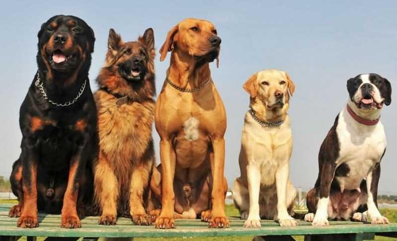 Как определить породу собаки - по внешнему виду, по фото, по щенку
