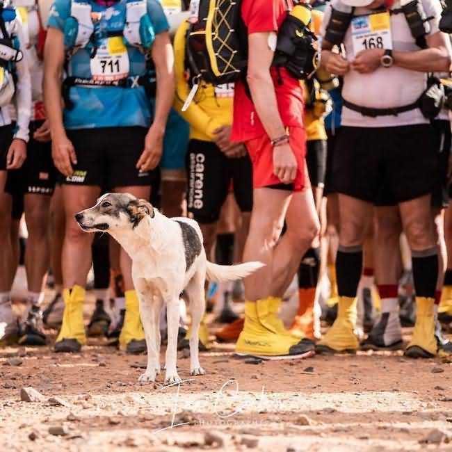 Собака Кактус в первых рядах на старте