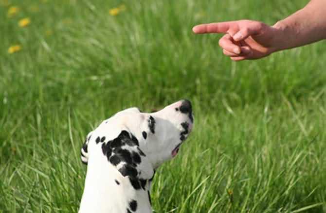собака выполняет команду фу