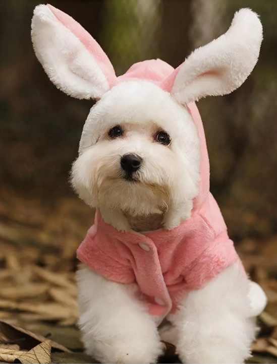 костюм зайчика для собаки на новый год