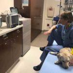 Лабрадор Винн поддерживает врачей в борьбе с коронавирусом