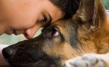 как показать собаке что ты её любишь