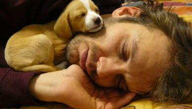 великие люди про собак высказывания и афоризмы