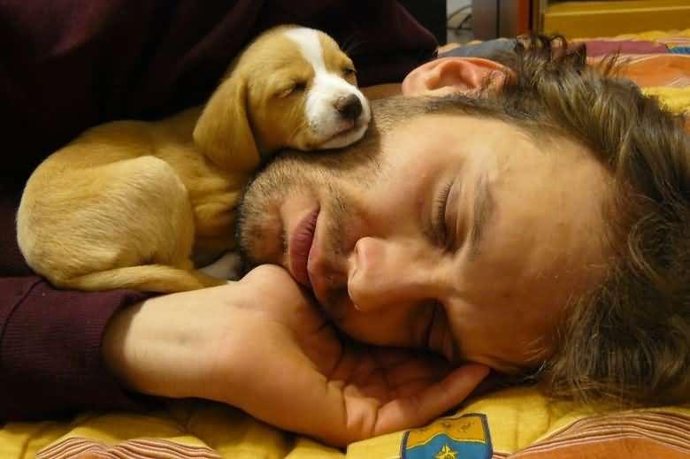 Великие люди - про собак. Высказывания и афоризмы.