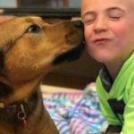 Как 6-летний ребенок спас 1000 собак