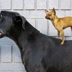 За какой собакой легче ухаживать: маленькой или большой
