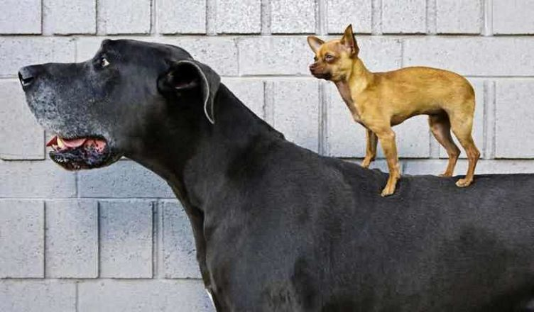 за какой собакой легче ухаживать большой или маленькой