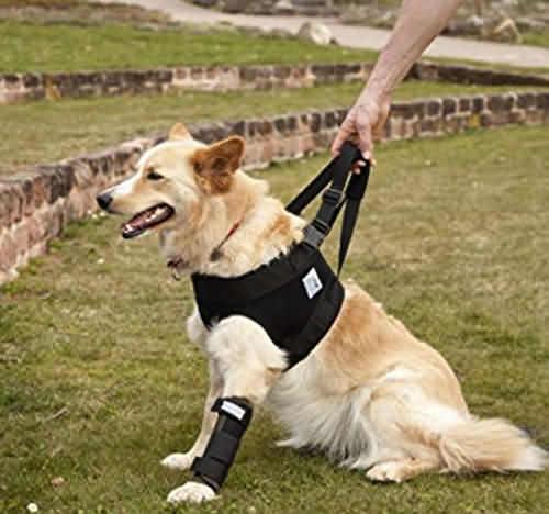 медицинская шлейка для травмированных собак
