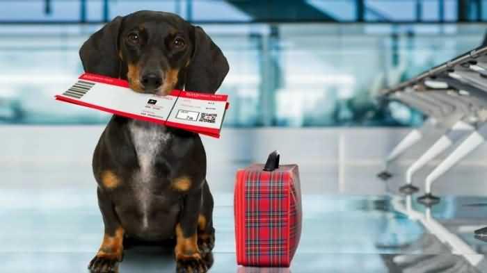 чипирование собак в России