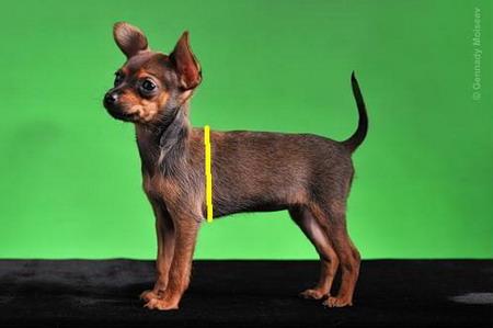 вязаный свитер своими руками собаке