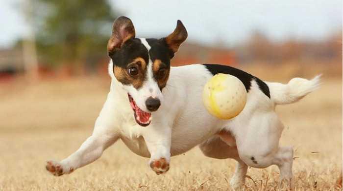 игрушки для собак в подарок на Новый год