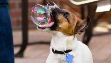 мыльные пузыри для собак со вкусом бекона