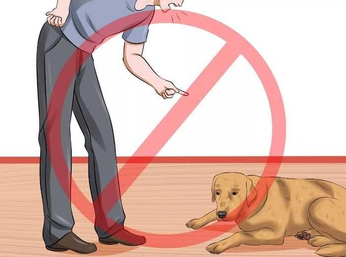 не кричите на щенка
