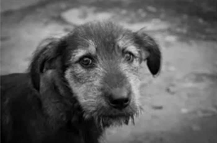 несчастная собака