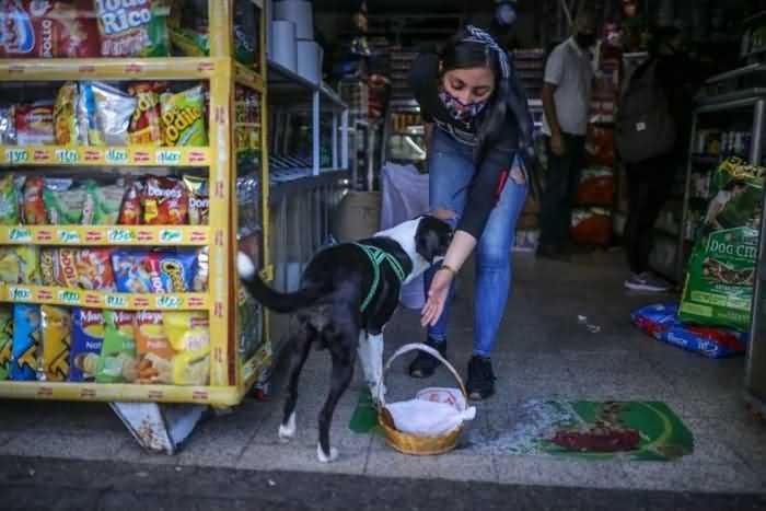 Пёс Ниньо пришел в магазин
