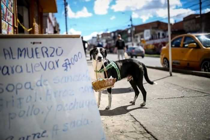 Пёс Ниньо возле магазина