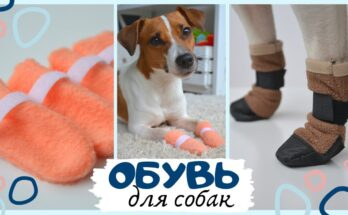 Как сшить носочки и ботиночки для собаки своими руками