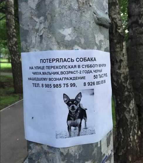 объявление ищу собаку