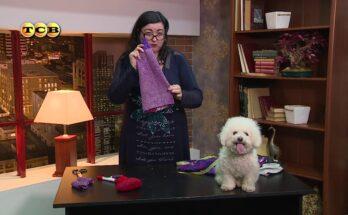 Как сшить собаке одежду из старых вещей