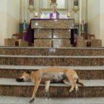 Священник приводит бродячих собак в церковь, чтобы затем найти им дом