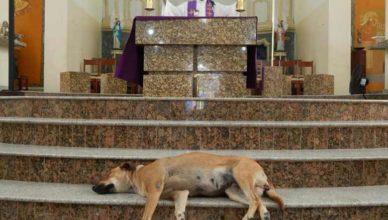 Священник и собаки на мессе