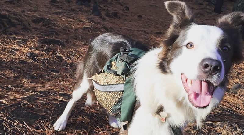 собаки помогают распространять семена