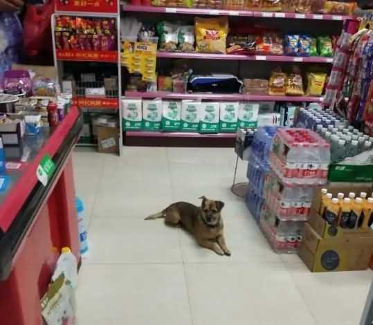 малыш Сяо Бао ждет свою хозяйку в больничном магазинчике