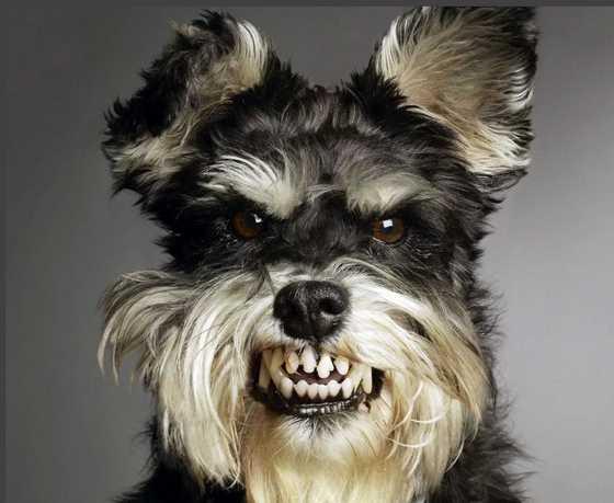 отчего пес злой стих про собаку для детей