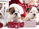 5 идей подарков для собак на Новый год