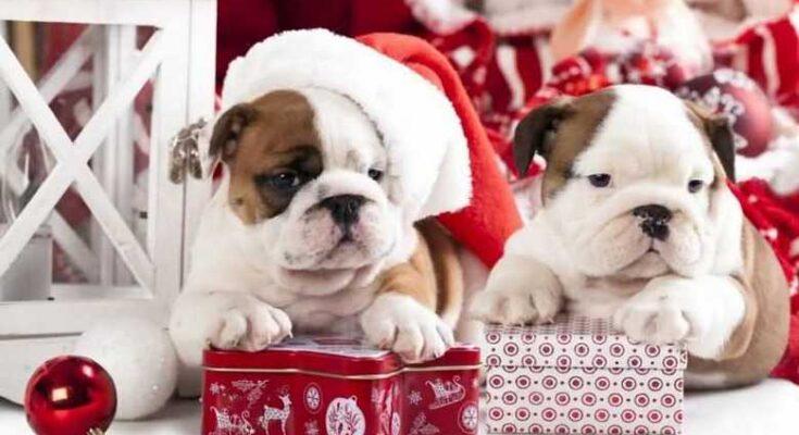подарки для собак на Новый год