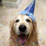 Подарок собаке на Новый год, день рожденья: что купить или сделать своими руками