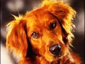 В Башкирии собака спасла семью из горящего дома
